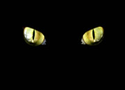 Why Animals' eyes Glow in the Dark?