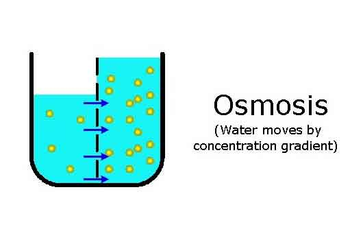 Meaning of Osmosis